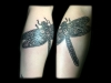 Suze-Dragon-Fly